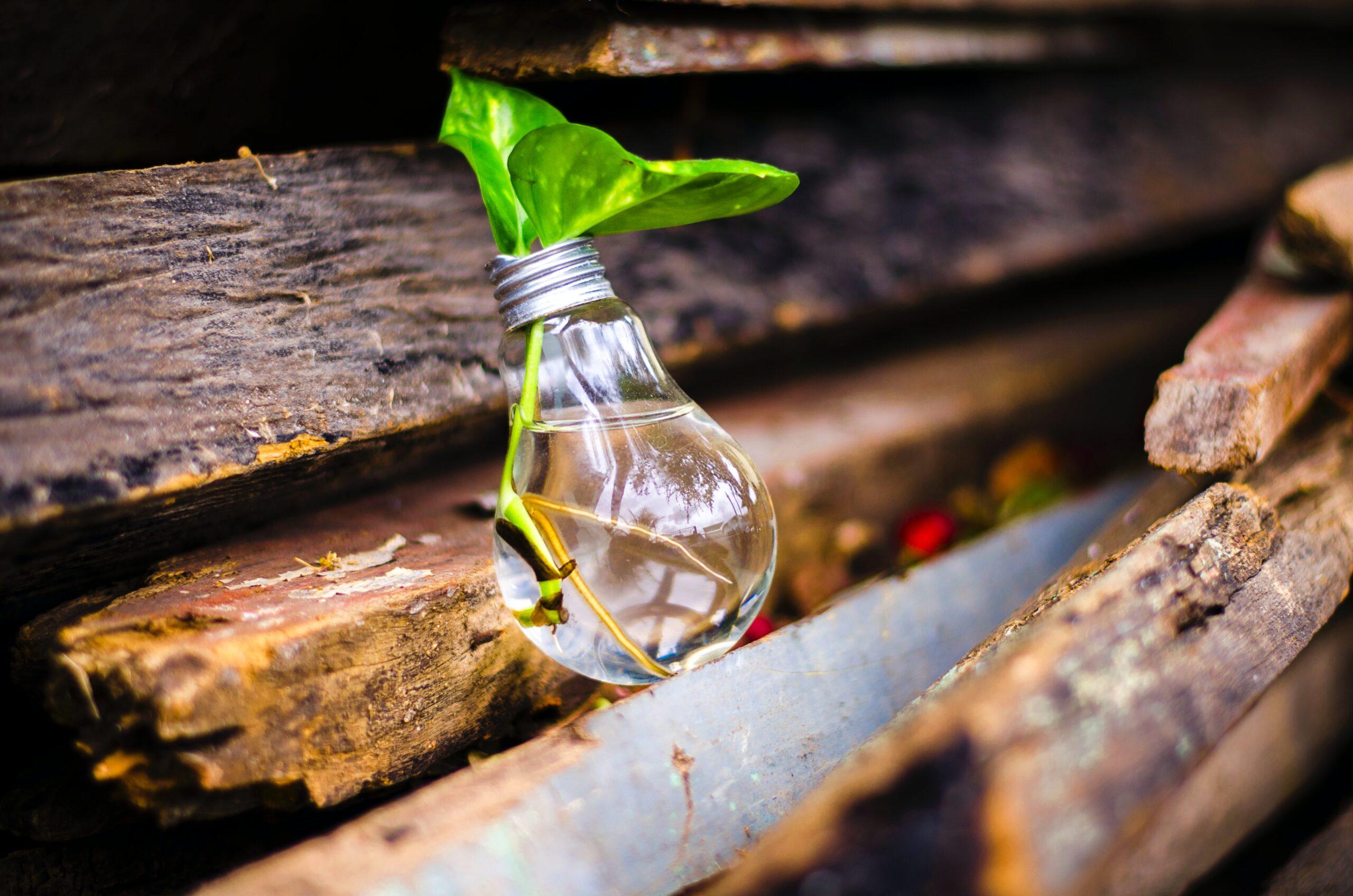 program dla innowacyjnych firm w branży rolniczej